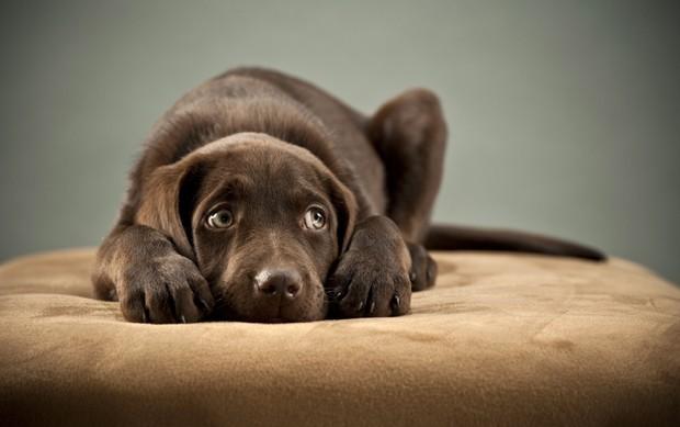 pet-cão-cachorro-medo-fogos-artifício-ano-novo (Foto: Thinkstock)