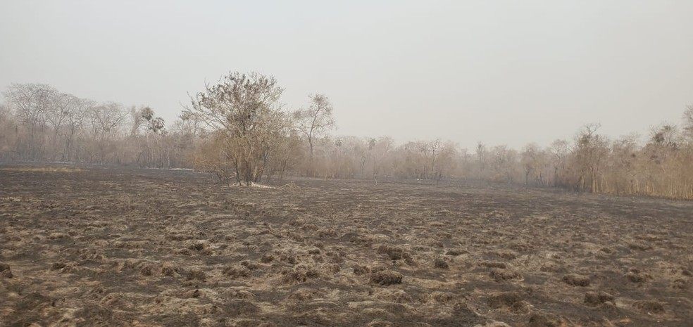 Área queimada na fazenda Caiman em Miranda, MS — Foto: Corpo de Bombeiros/Divulgação