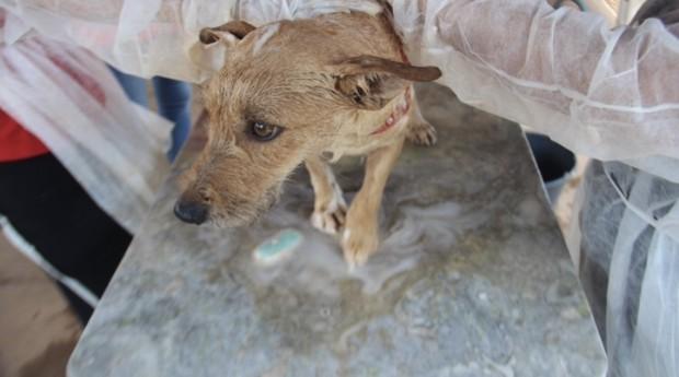 brumadinho pet (Foto: Divulgação/Alisson Pereira/CRMV-MG)