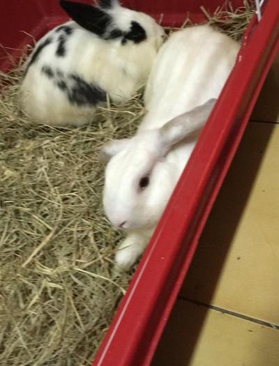 coelhos  (Foto: Arquivo Pessoal)