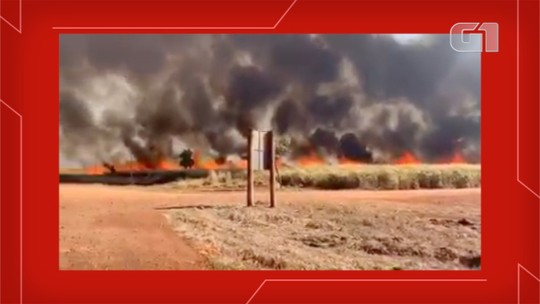Vídeo mostra incêndio que destrói plantações de cana-de-açúcar e milho em seis fazendas de MS