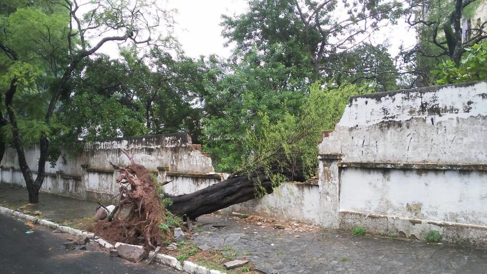 Árvore cai em cima de muro de creche, no bairro de Miramar, em João Pessoa — Foto: Antônio Vieira/TV Cabo Branco