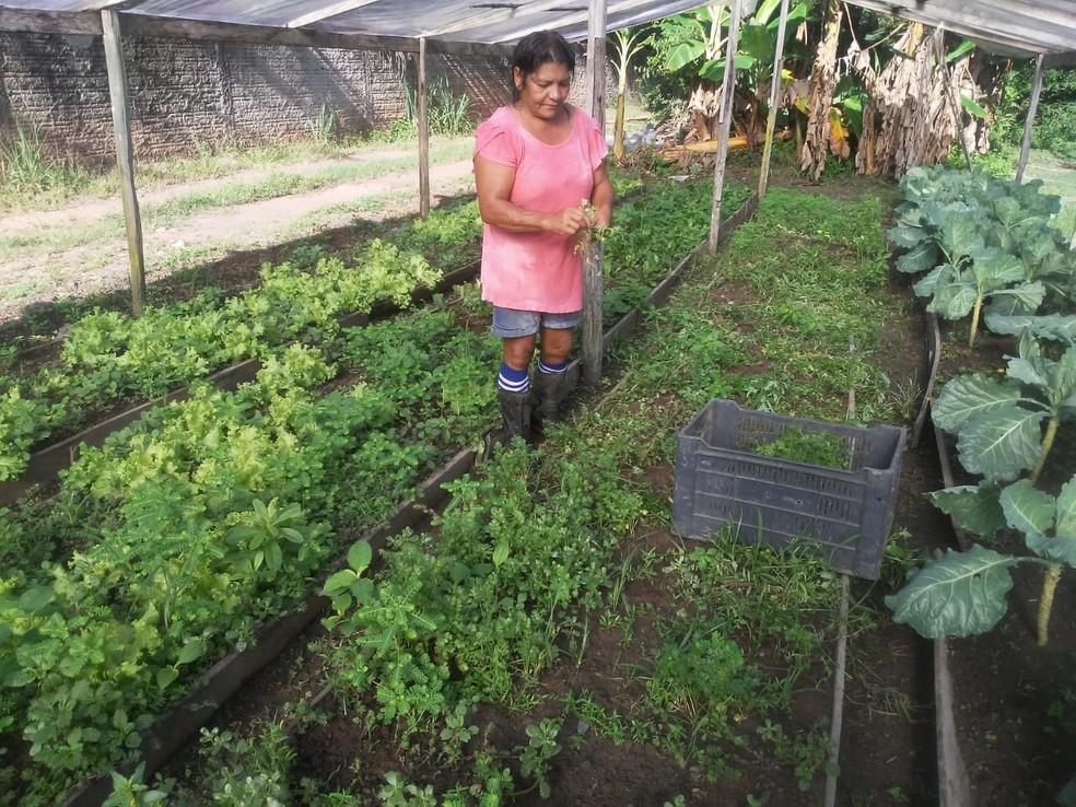 Produtora rural de Macapá (AP), Marlene Conceição de Jesus, trabalha junto com seu marido e filho — Foto: Arquivo Pessoal