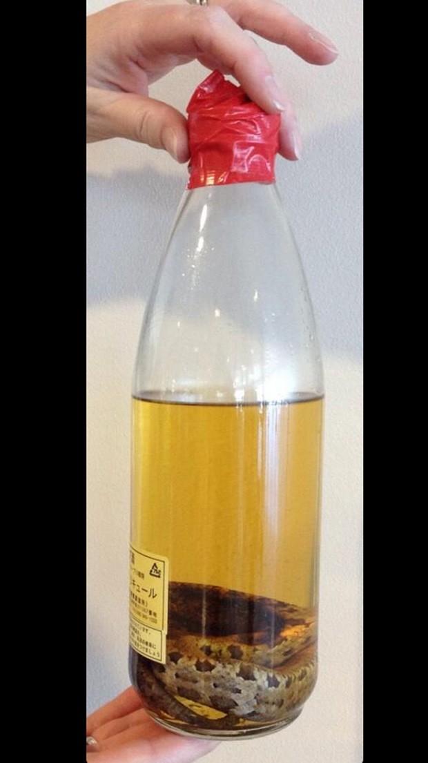 Em 21/11, uma garrafa contendo uma cobra submersa em uma bebida foi apreendida Syracuse Hancock International Airport. O motivo do confisco, na verdade, era porque a quantidade de líquido estava acima do permitido (Foto: Reprodução/Twitter/TSAmedia_LisaF)