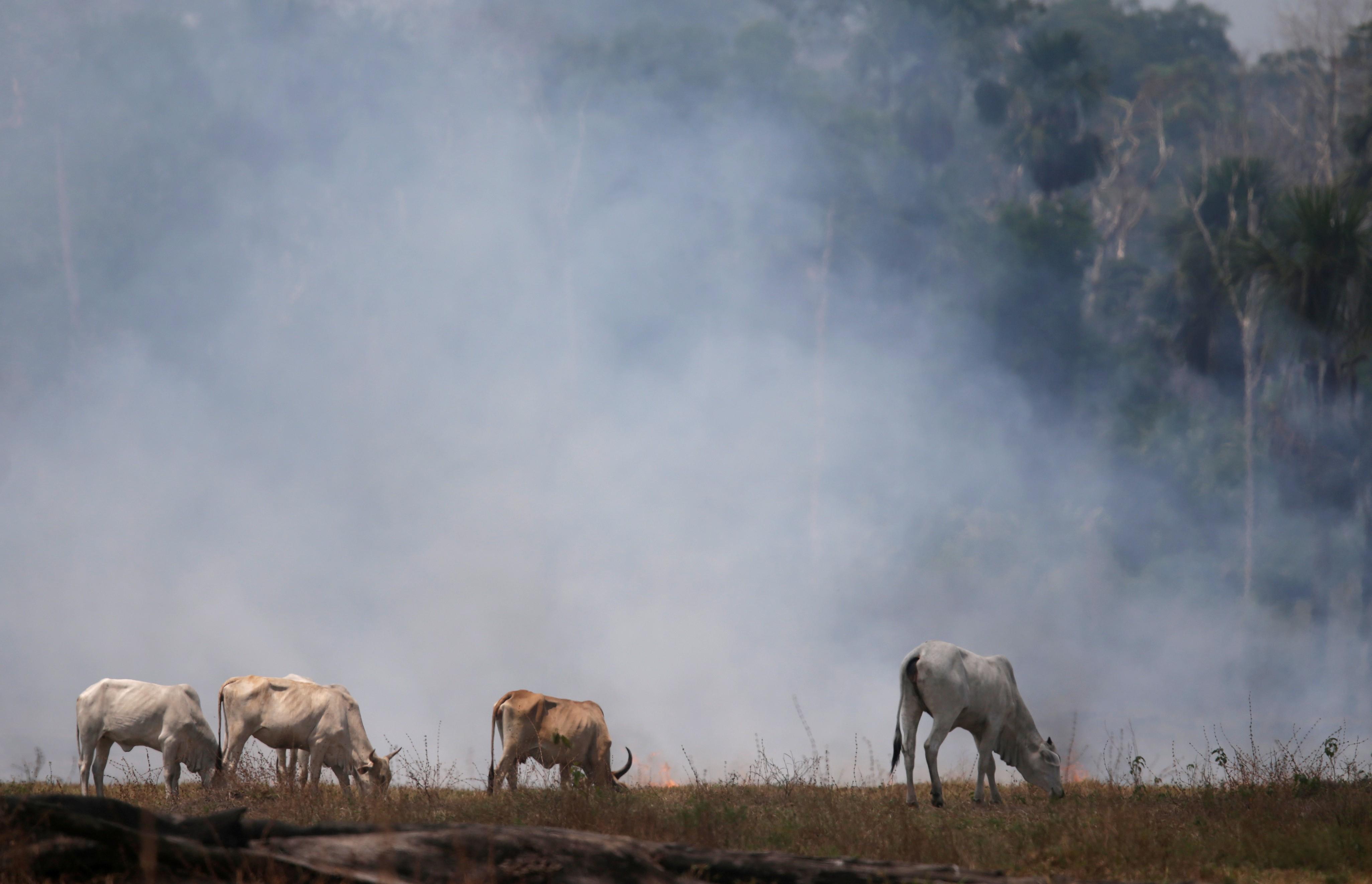 Incêndios na Amazônia aumentaram 28% em julho em comparação ao ano passado, mostram dados do Inpe thumbnail
