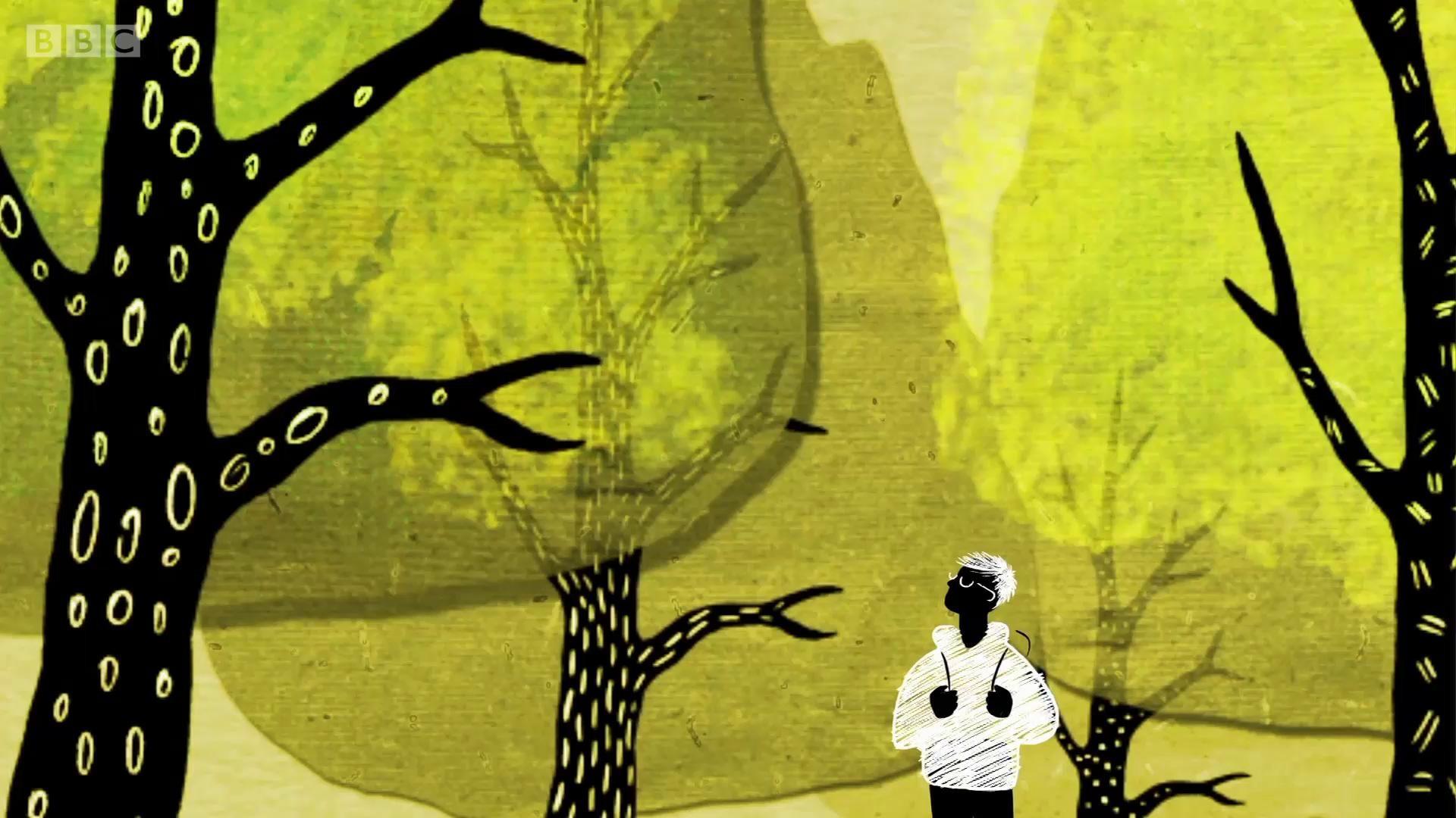 Como as árvores conversam entre si por uma rede subterrânea