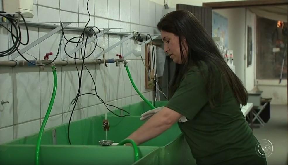 Filhotes são monitorados o tempo todo na maternidade do zoológico (Foto: TV TEM/Reprodução)