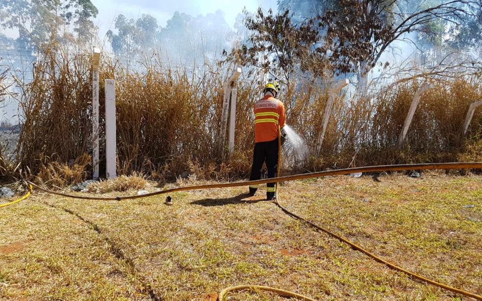 Bombeiro combate fogo em vegetação às margens da L4 Sul, em Brasília (Foto: Corpo de Bombeiros do DF/Divulgação)