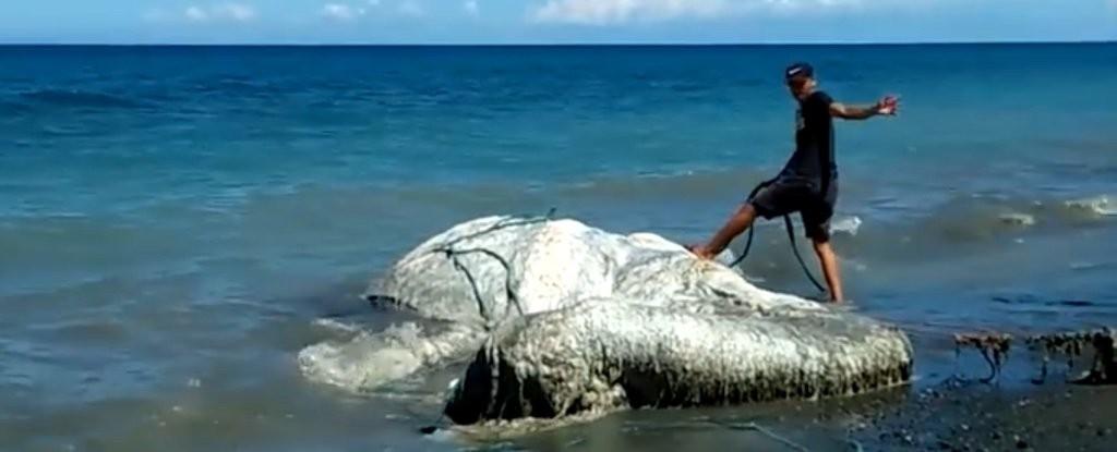 Carcaça encalhada em praia filipina (Foto: Viral Press/YouTube)
