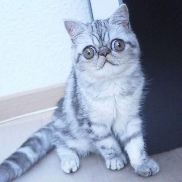 O olhar petrificado do bichano está chamando atenção na web