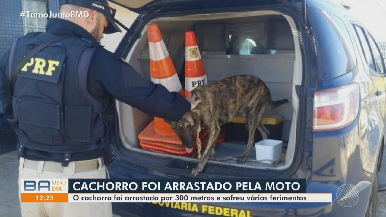 Cachorro é resgatado após ser arrastado por donos em motocicleta em movimento