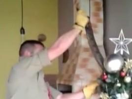Jiboia é capturada em árvore de Natal em Inhumas, GO;  vídeo (Reprodução/TV Anhanguera)