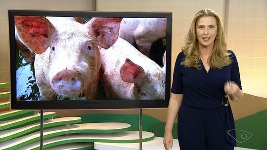 Idaf monitora ausência de peste suína no ES