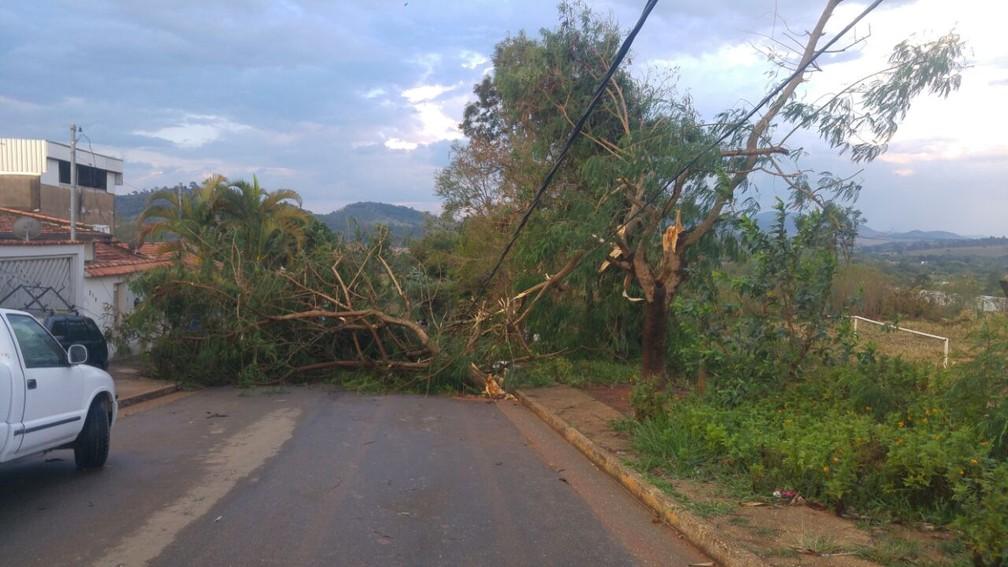 Árvores caíram em vários pontos do Cidade Jardim, em Pouso Alegre (Foto: Magson Gomes / Terra do Mandu)