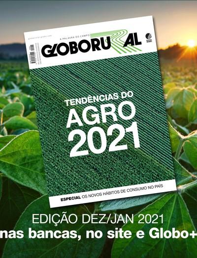 arte dezembro (Foto: Globo Rural)