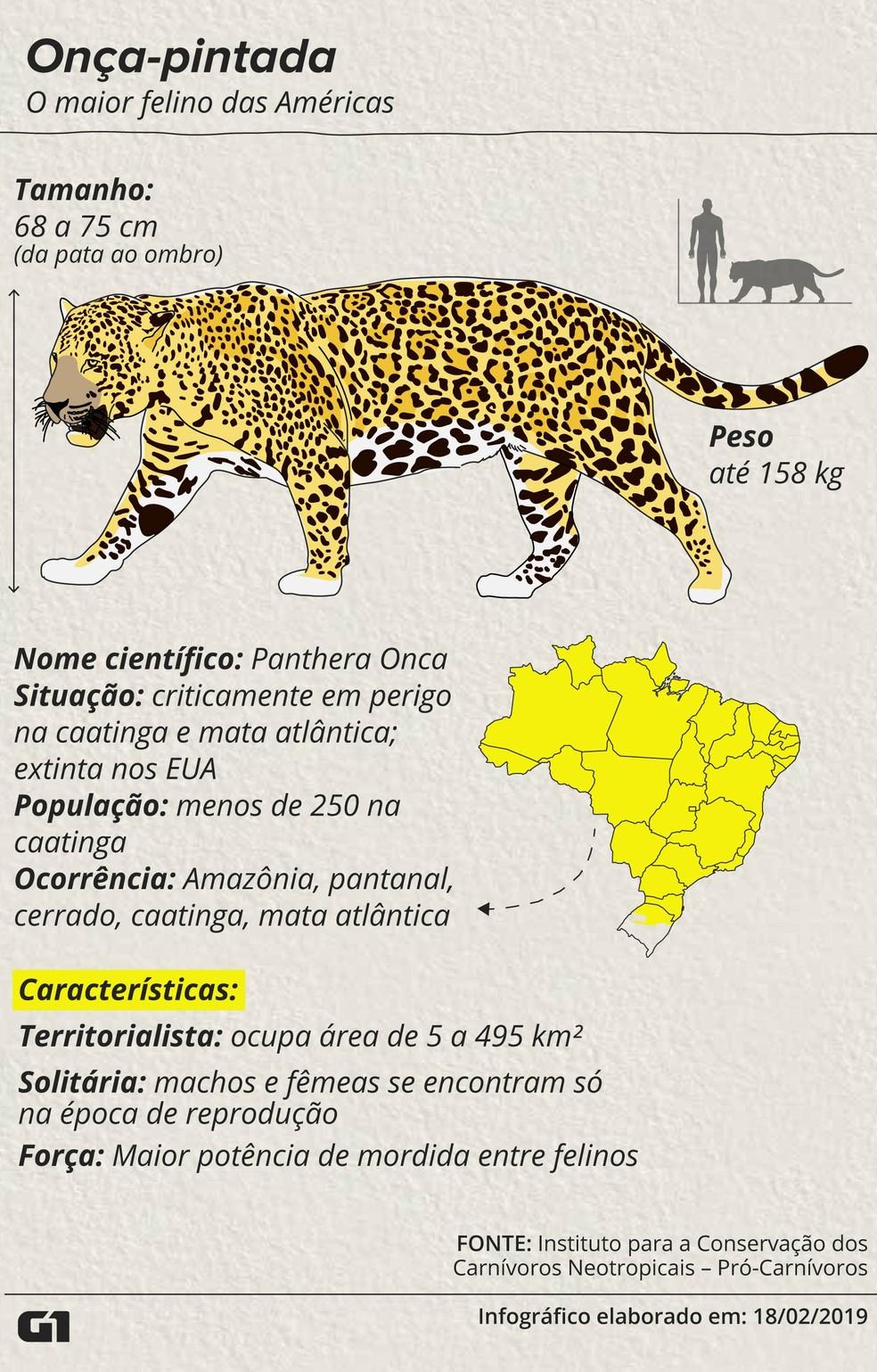 Onça-pintada, o maior felino das Américas — Foto: Igor Estrella/G1