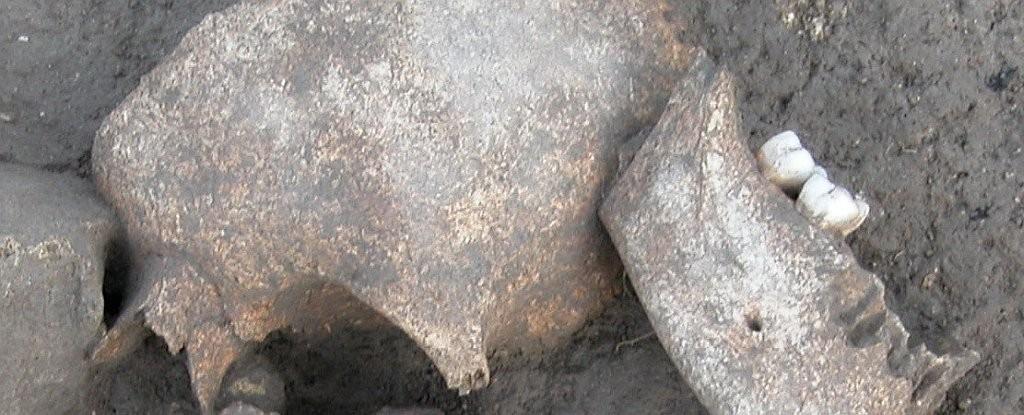 Arqueólogos encontraram crânios de mais de 2 mil anos de idade (Foto: Divulgação)