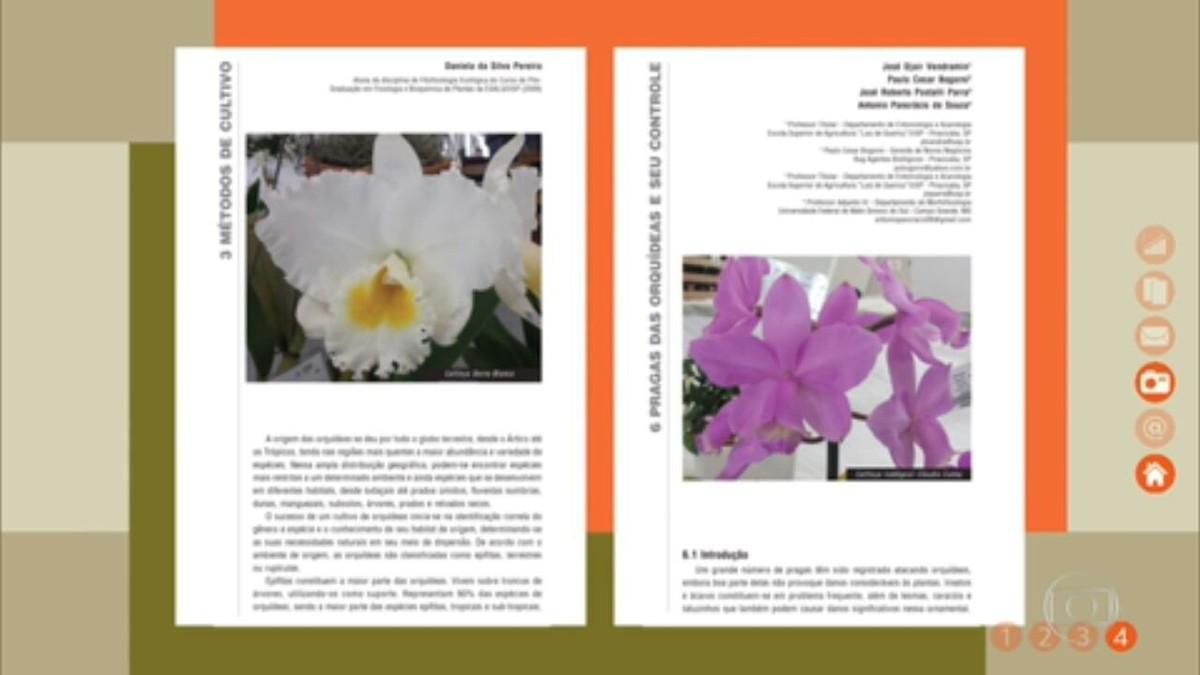 Descubra a história das orquídeas