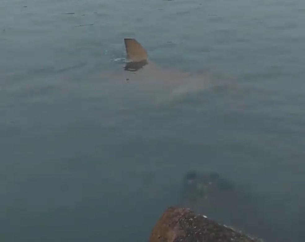 Tubarão foi visto em área central de Balneário Camboriú (SC) na quinta-feira (16) — Foto: Redes Sociais/Reprodução
