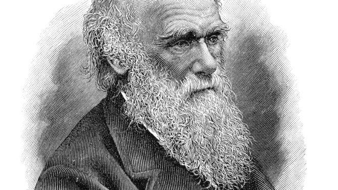 Darwin percebeu que competição pode às vezes gerar benefícios para indivíduos que geram custos para o grupo (Foto: Getty Images via BBC News Brasil)