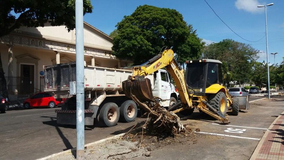 -  Retirada de árvores é para segurança de motoristas e pedestres  Foto: Jorge Abreu/G1