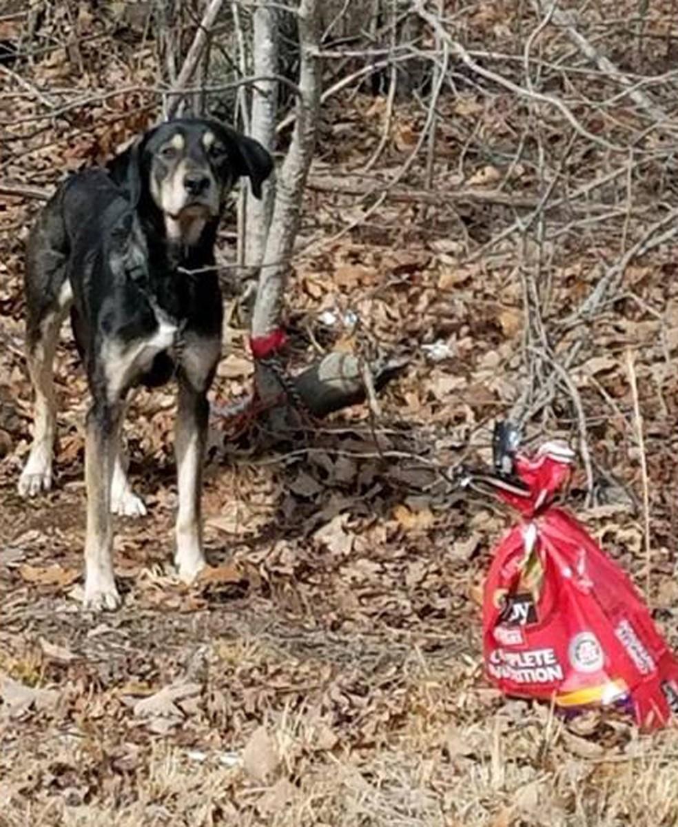 Zeus foi achado amarrado a uma árvore, ao lado de um saco de ração (Foto: Prince George County Animal Shelter/Facebook)
