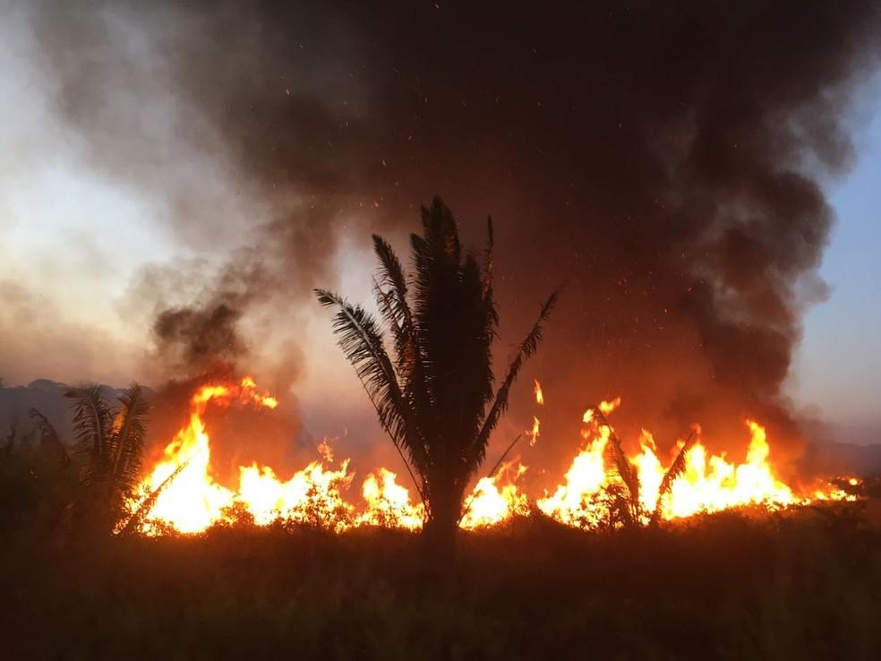Número de focos de incêndio aumenta em Rondônia. — Foto: Reprodução/ Brigada Municipal
