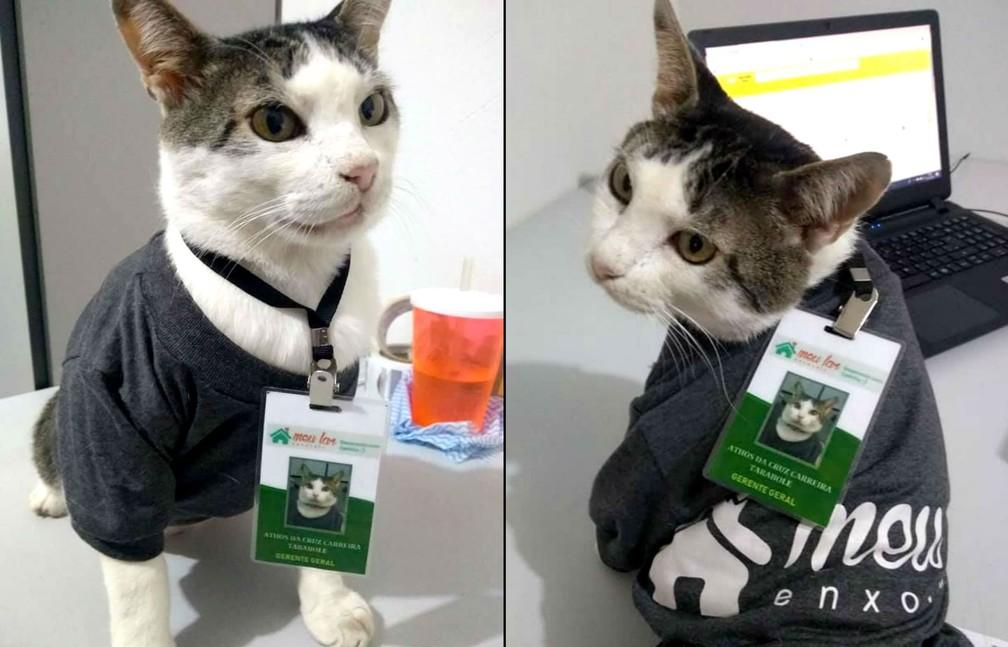 Gato Athos exibe seu crachá e uniforme em mesa do escritório de empresa em Ibitinga: gato adulto está adaptado ao novo lar e nunca mais voltou para as ruas — Foto: Arquivo pessoal