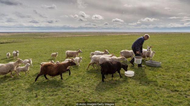 Islandeses nunca foram vikings - são descendentes de agricultores noruegueses que fugiram dos vikings (Foto: Getty Images/BBC)