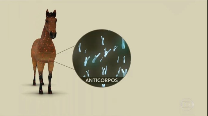 Soro contra a Covid-19 feito com plasma de cavalo será testado em humanos na Argentina | Coronavírus | G1