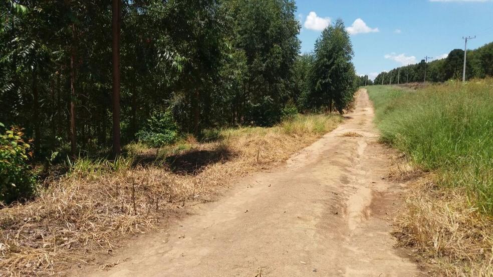 Corpo de jovem foi encontrado em plantação de eucaliptos em Votorantim (Foto: Jorge Silva/TV Votorantim)