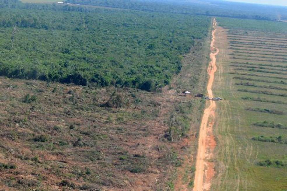 Desmatamento em Mato Grosso aumentou — Foto: Secom-MT
