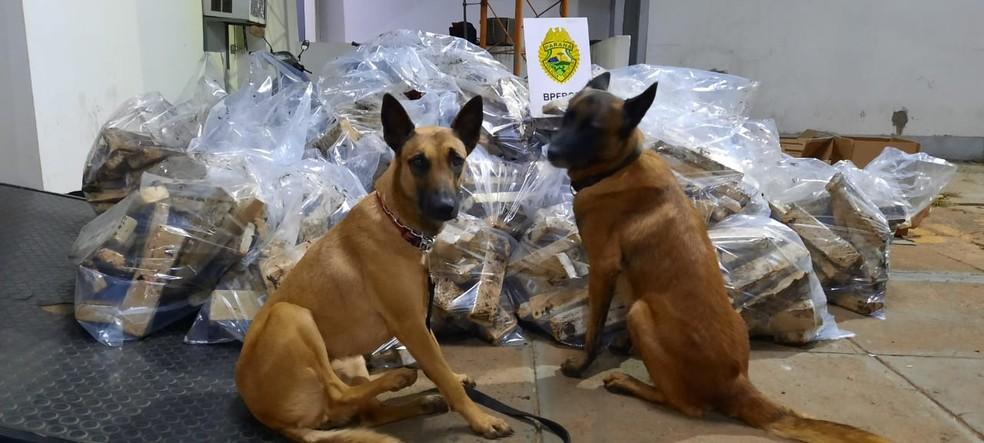 Maconha foi descoberta com a ajuda de cães farejadores  — Foto: Divulgação/PM