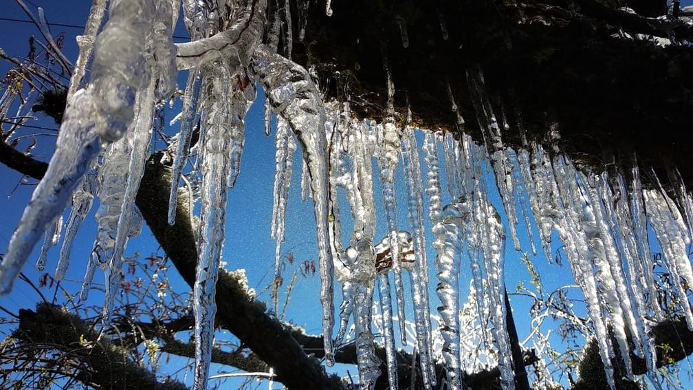 Árvore tomada pelo gelo em Urupema — Foto: Kíria Meurer/NSC TV