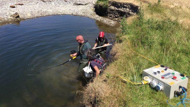 Ambientalistas resgatam e reanimam peixes encalhados na seca que atinge o Reino Unido (Foto: DAVE THROUP/ ENVIRONMENT AGENCY, UK)