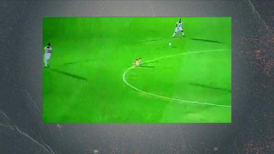 Confira a lista de animais que chamaram a atenção em campos de futebol