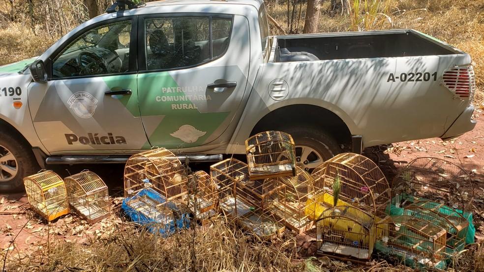 Polícia Ambiental multou morador de Lençóis Paulista nesta sexta-feira (26) — Foto: Polícia Ambiental/Divulgação