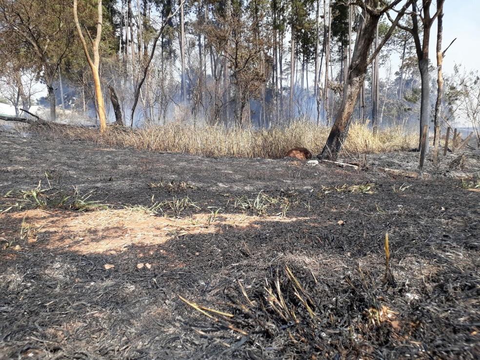 Área ficou destruída após o incêndio (Foto: Agda Prado)