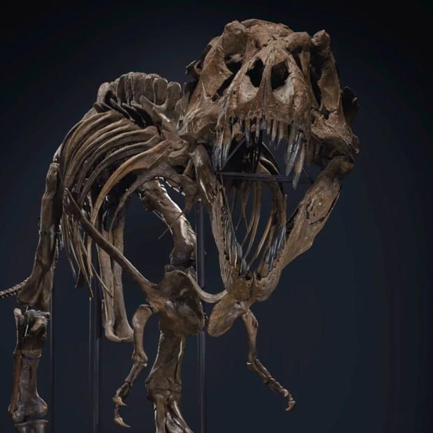 Esqueleto de T-Rex será leiloado por pelo menos R$ 31 milhões (Foto: Divulgação)