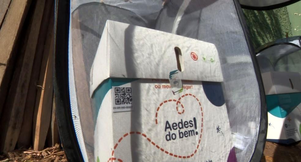 Testes do programa 'Aedes do bem' em Indaiatuba — Foto: Reprodução / EPTV