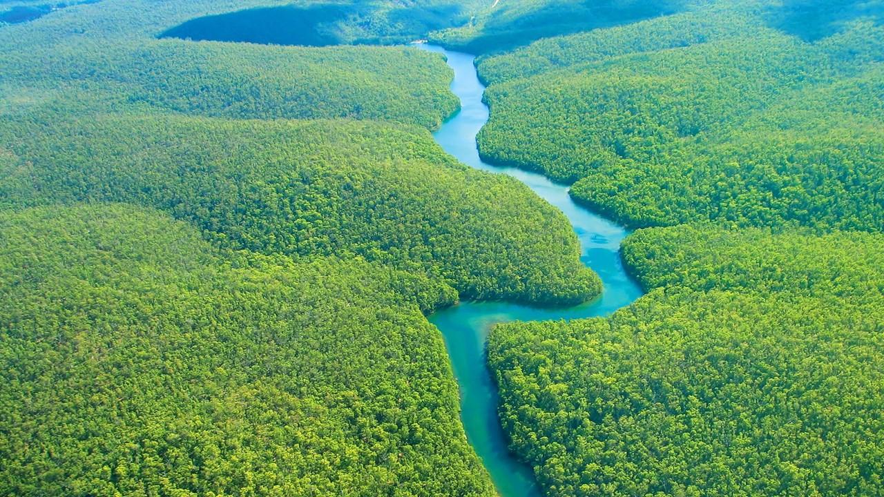 Floresta Amazônica (Foto: Reprodução)