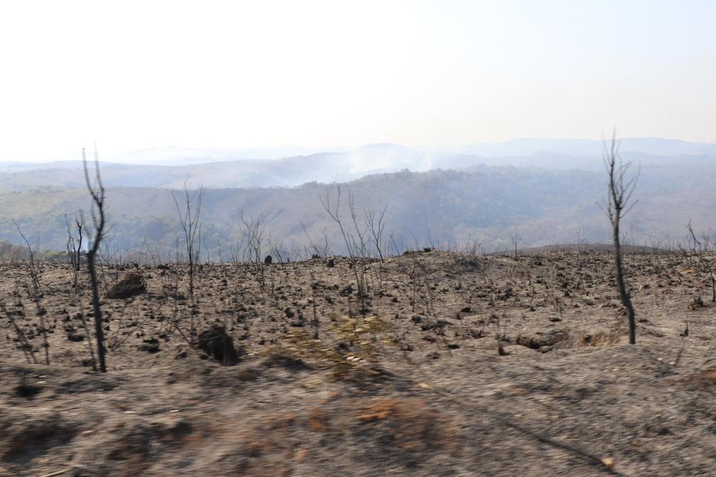 Incêndio destruiu cerca de 80% do Parque do Juquery, segundo a Prefeitura de Franco da Rocha — Foto: Divulgação/Secretaria Estadual de Infraestrutura e Meio Ambiente