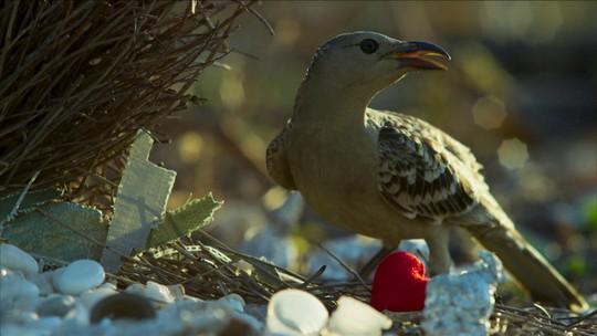 Na competição por comida entre pássaros, esperteza não é suficiente