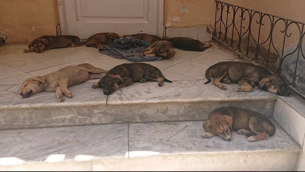 Imagem sem data de alguns dos animais do Kabul Small Animal Rescue publicada em um perfil de rede social do grupo — Foto: Reprodução/Facebook
