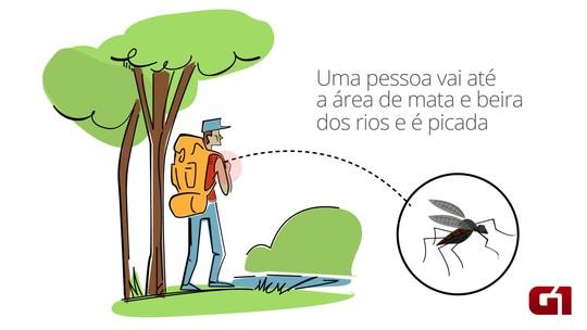 Brasil tem 240 mortes confirmadas devido à febre amarela, diz ministério