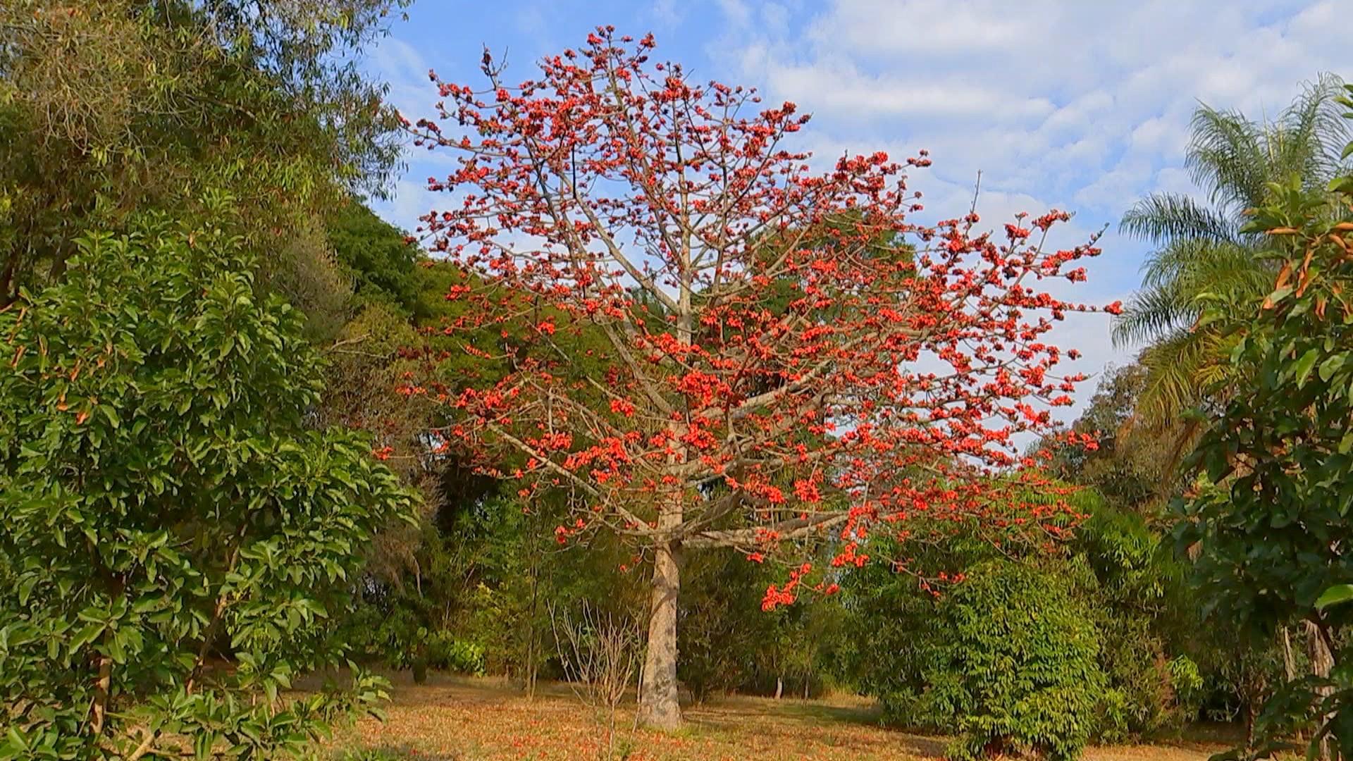 Escolher as árvores certas pode deixar propriedade rural muito mais atraente