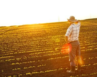 Tendências 2021: confira as projeções para 23 setores do agronegócio brasileiro