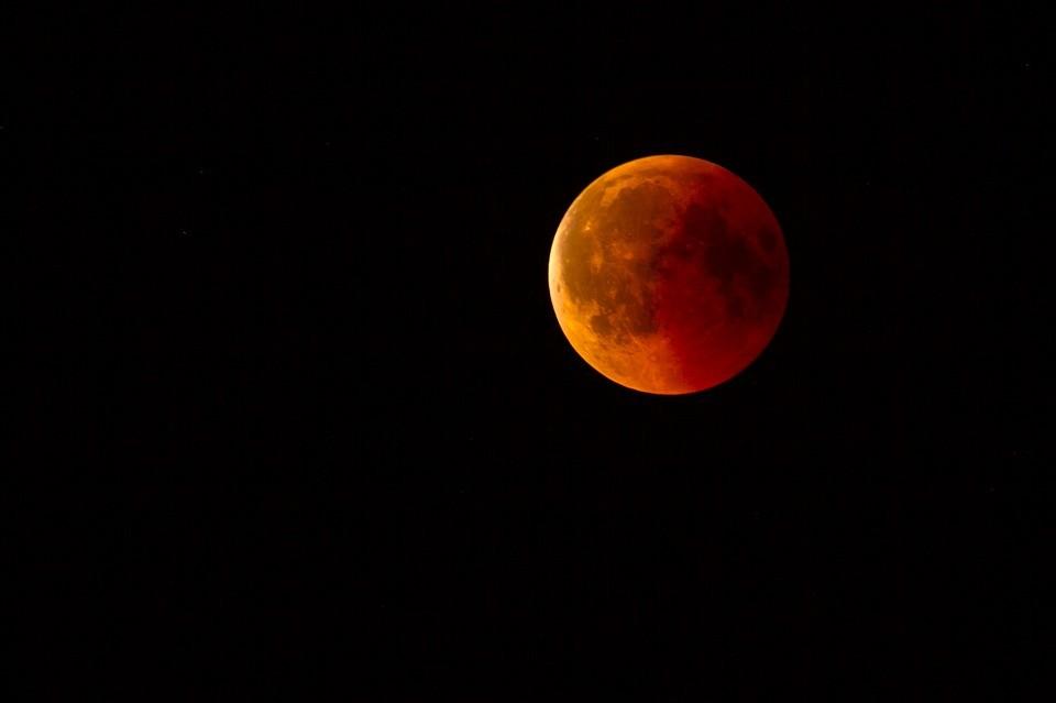 Eclipses alteram o comportamento de animais por conta de seus relógios biológicos, que são organizados de acordo com a claridade (Foto: Pixabay)