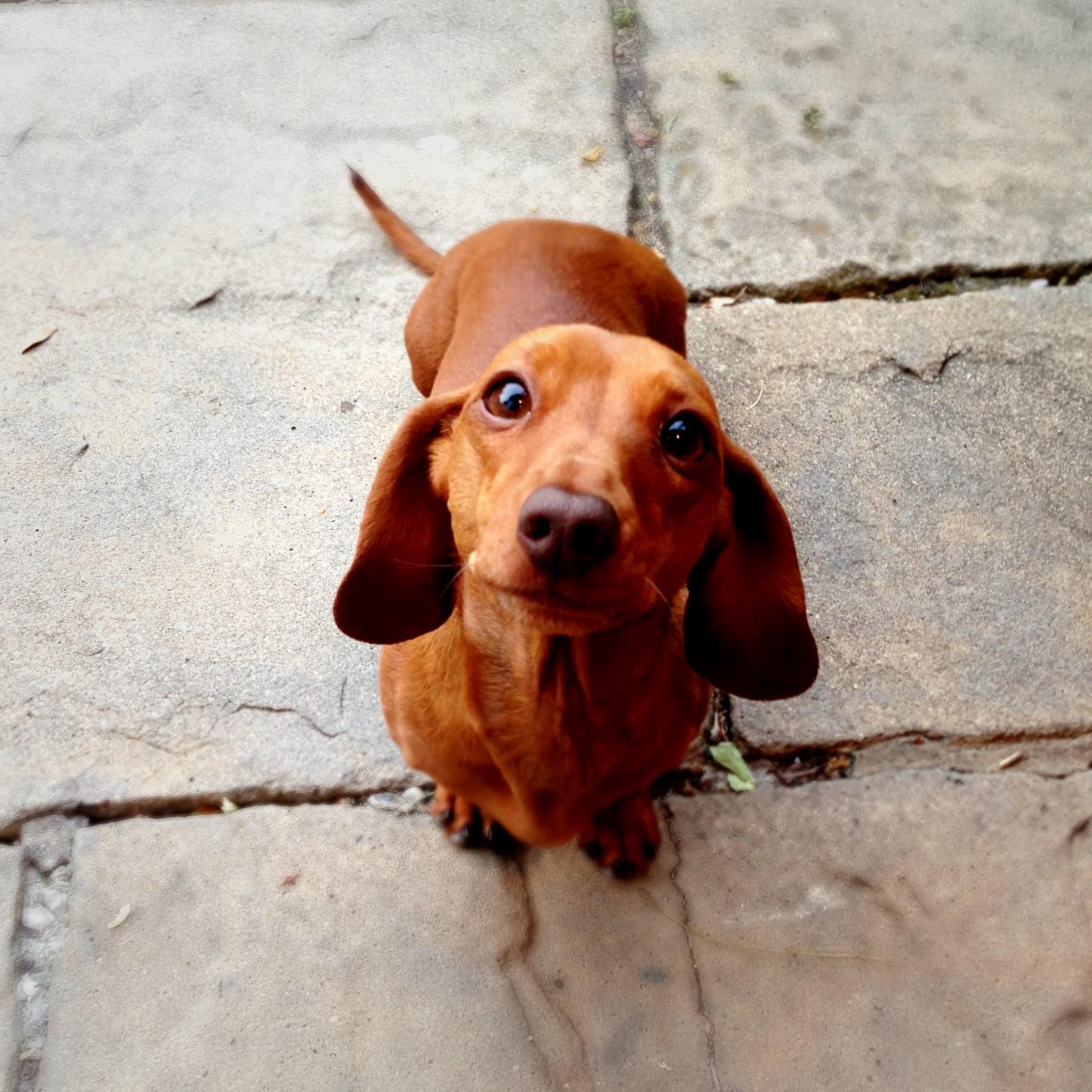 Tecnologia de impressão 3D auxilia problemas ortopédicos em cães de pequeno porte (Foto: Getty Images)