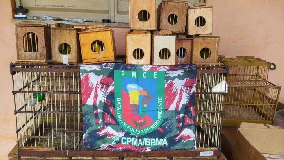 Agentes chegaram localizaram a propriedade após denúncias de rinhas com aves canário-da-terra. — Foto: BPMA/ Divulgação